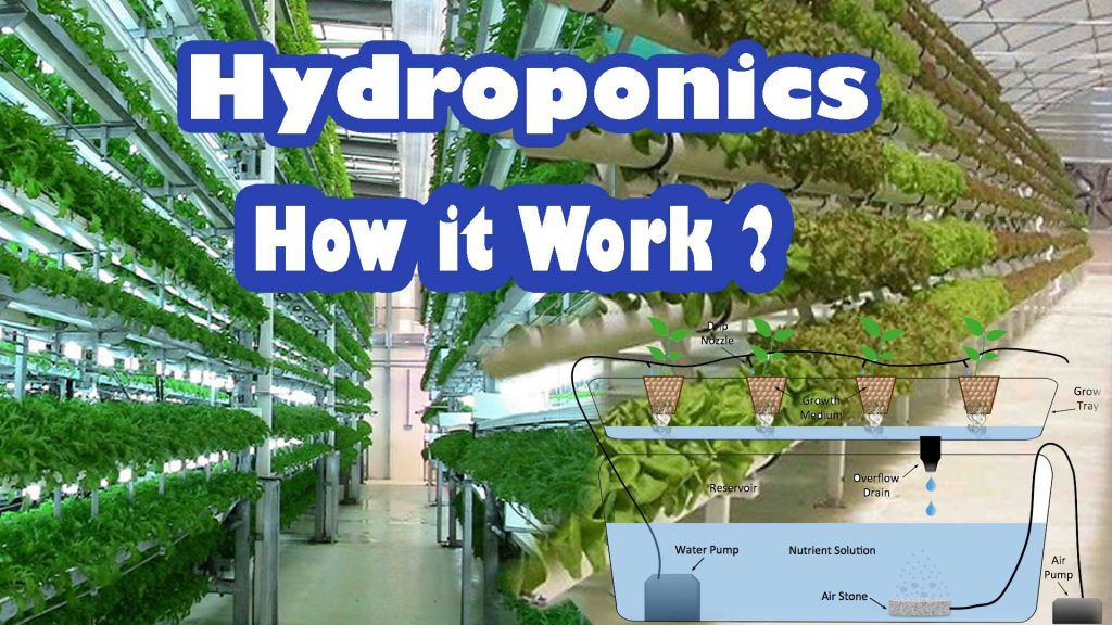 hydroponic how it works