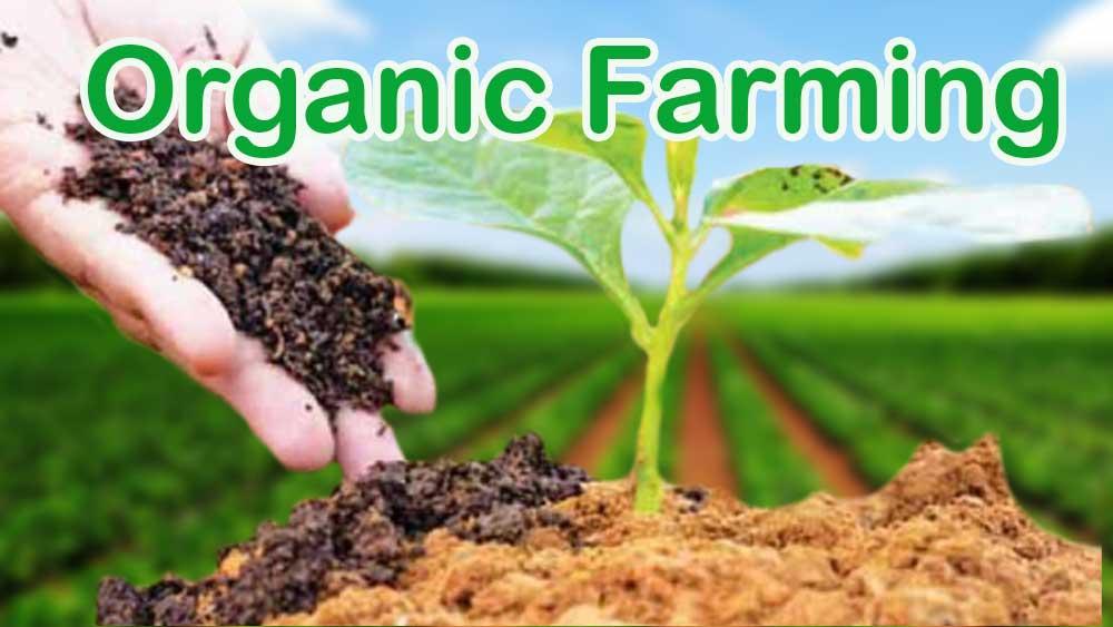 Organic Farming, traditional farming, conventional farming, farming, organic