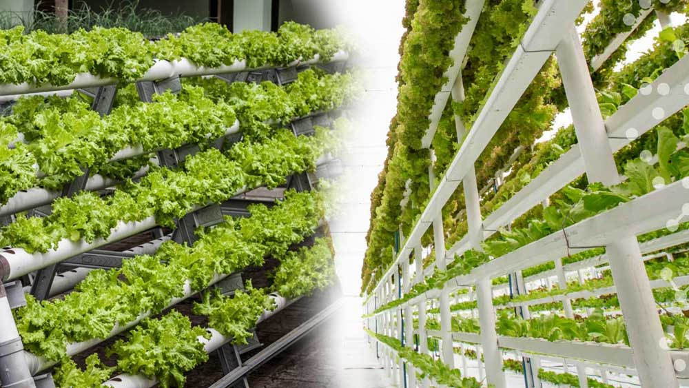 vertical farming, vertical farming technology, types of vertical farming, vertical farming techniques