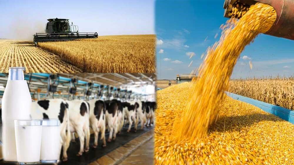 Advantages of intensive farming, intensive farming, farming, sudufarming