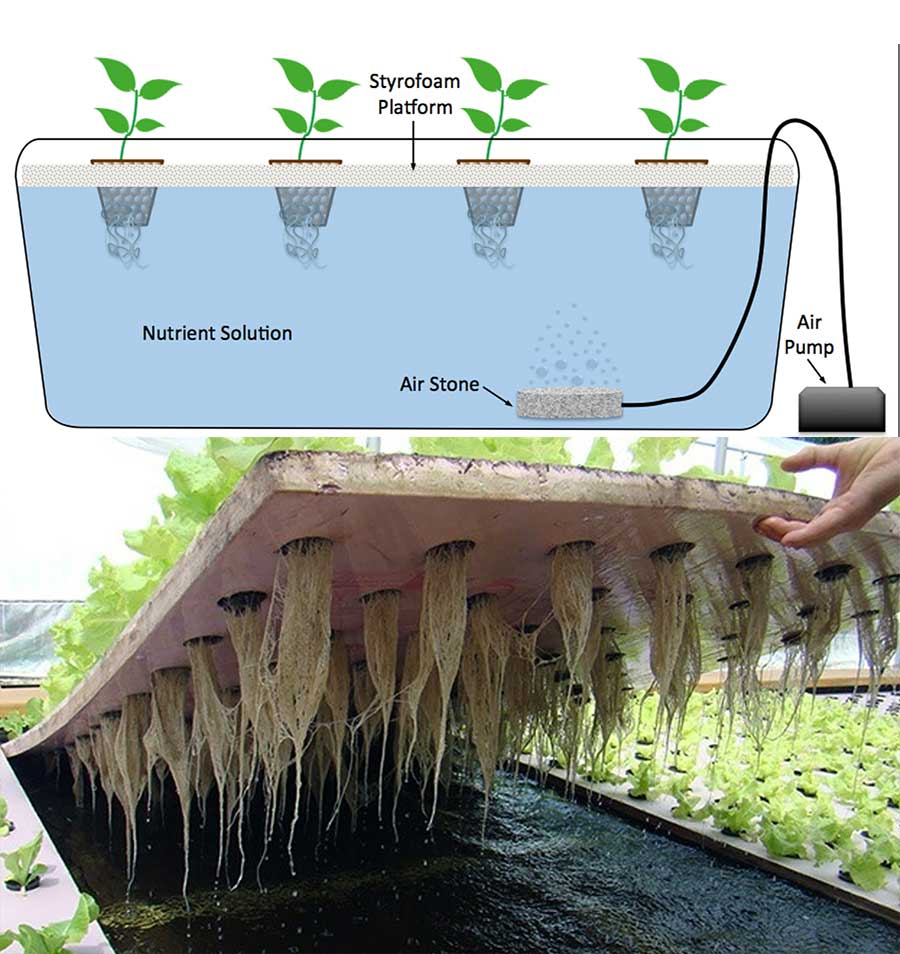 Deep Water Culture, hydroponic