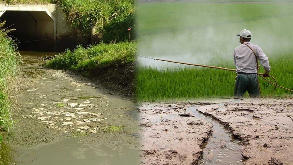 Impacts of modern agriculture