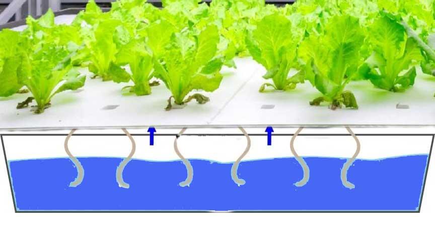 Wick System hydroponic, hydroponic