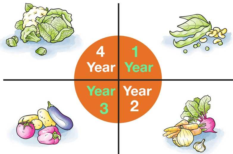 crop rotation, modern farming, sudufarming