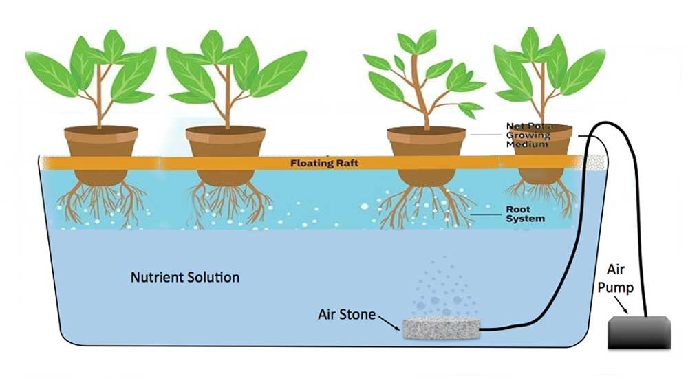 Components of Deep Water Culture Hydroponic System