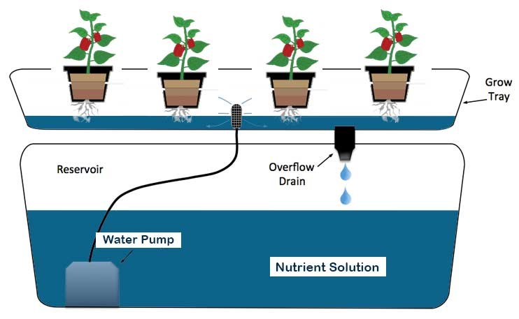 Components of Ebb and Flow Hydroponic System