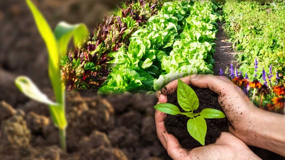 Sustainable Soil Management Practices